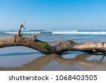 fallen tree limb with green... | Shutterstock . vector #1068403505