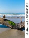fallen tree limb with green... | Shutterstock . vector #1068403511