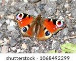 european common peacock...   Shutterstock . vector #1068492299