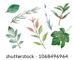 watercolor tree branches  and... | Shutterstock . vector #1068496964