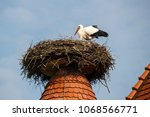 white stork in their natural... | Shutterstock . vector #1068566771