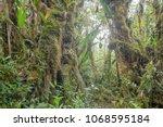 interior of mossy montane...   Shutterstock . vector #1068595184