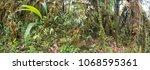interior of mossy montane...   Shutterstock . vector #1068595361