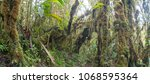 interior of mossy montane...   Shutterstock . vector #1068595364
