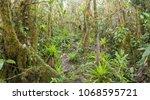 interior of mossy montane...   Shutterstock . vector #1068595721