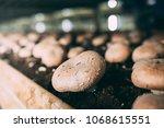 mushrooms portobello and... | Shutterstock . vector #1068615551