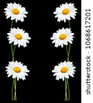 daisies summer white flower... | Shutterstock . vector #1068617201