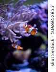 fish coral reef | Shutterstock . vector #1068652655