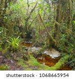 blackwater stream in mossy...   Shutterstock . vector #1068665954