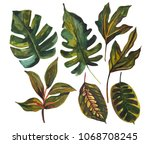 watercolor tropical leaf set.... | Shutterstock . vector #1068708245