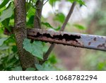 rust and tree durability | Shutterstock . vector #1068782294