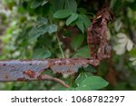 rust and tree durability | Shutterstock . vector #1068782297