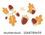 oak. branch. isolated acorns on ... | Shutterstock .eps vector #1068789659