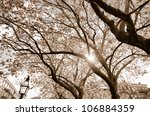 trees blooming in the spring - stock photo