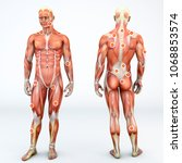 myofascial trigger points  are... | Shutterstock . vector #1068853574