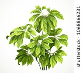tropical plant with large... | Shutterstock .eps vector #1068866231