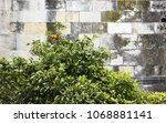 stone wall of the ancient... | Shutterstock . vector #1068881141