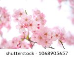 nature flower image | Shutterstock . vector #1068905657