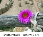 Flower Tied To A Wooden Pole