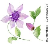 Beautiful Purple Clematis On A...
