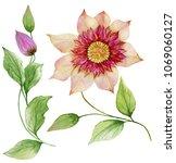 beautiful clematis on a stem.... | Shutterstock . vector #1069060127