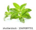 stevia rebaudiana on white... | Shutterstock . vector #1069089701