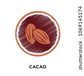 cacao logo isolated on white... | Shutterstock .eps vector #1069145174