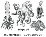 octopus hand drawn vector... | Shutterstock .eps vector #1069159199