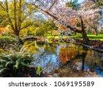 springtime blossom in the... | Shutterstock . vector #1069195589