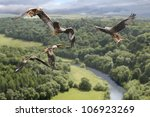 Red Kites Circle Above The...