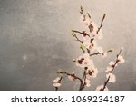 spring blossoms blooming... | Shutterstock . vector #1069234187