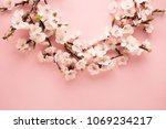 spring blossoms blooming... | Shutterstock . vector #1069234217