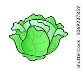 vector green liner cabbage....   Shutterstock .eps vector #1069237859