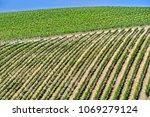 vineyards near the city of san... | Shutterstock . vector #1069279124