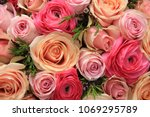 pink roses and peonies in a... | Shutterstock . vector #1069295789