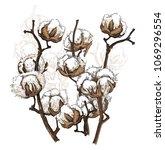 hand drawn cotton brunch in... | Shutterstock .eps vector #1069296554