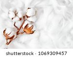 branch of white cotton flowers | Shutterstock . vector #1069309457