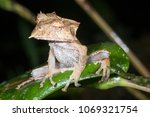the extremely rare and...   Shutterstock . vector #1069321754