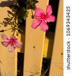 dainty exotic miniature  pink ... | Shutterstock . vector #1069343435