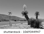ivory yucca blossom west texas... | Shutterstock . vector #1069344947