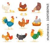 Chicken Vector Cartoon Chick...