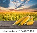 ripe tasty corn on wooden table ...