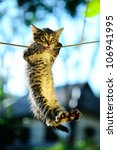 Stock photo kitten on a rope in the park 106941995