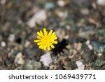 closeup image of dandelion... | Shutterstock . vector #1069439771