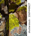 green and gray moss on stones. | Shutterstock . vector #1069448627