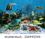 coral reef with starfish and... | Shutterstock . vector #106945244