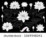 Set Of Lotus Silhouettes ....