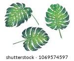 monstera leaf watercolor... | Shutterstock . vector #1069574597