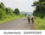 two farmer women from behind ...   Shutterstock . vector #1069595285