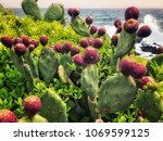 Raw Prickly Pear With Sicilian...